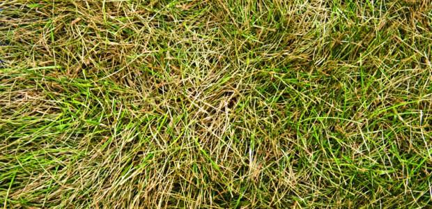 torrtgrass