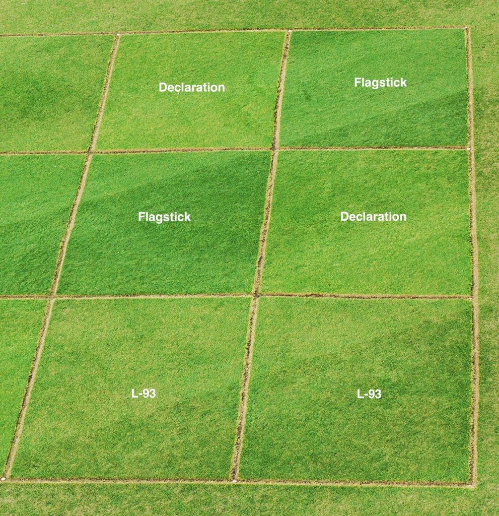 Michigan State University, Dollar Spot on turfgrass
